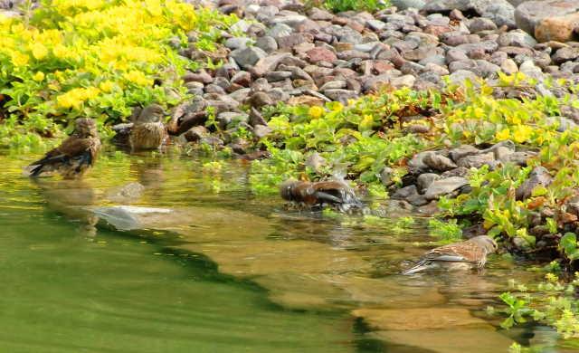 Fragen zum teich reinigen klares wasser im teich for Welche tiere fressen algen im teich